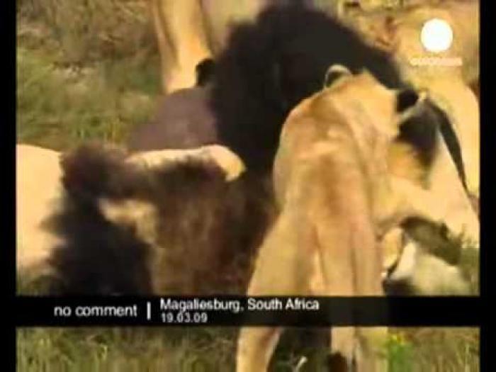 Видео онлайн Животные и люди - уникальное.